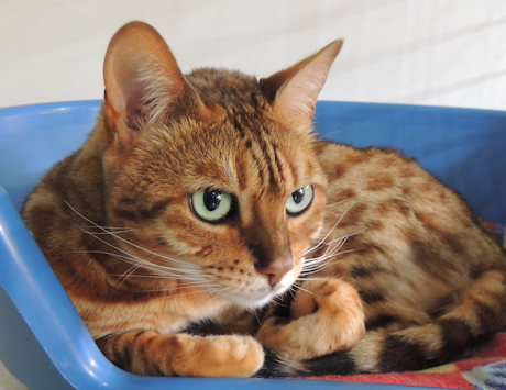 1 cat in one cattery unit