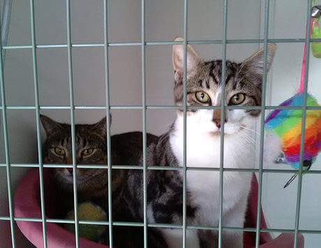 2 cats in one cattery unit