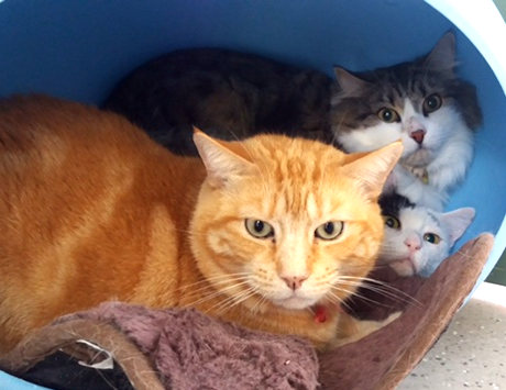 3 cats in one cattery unit