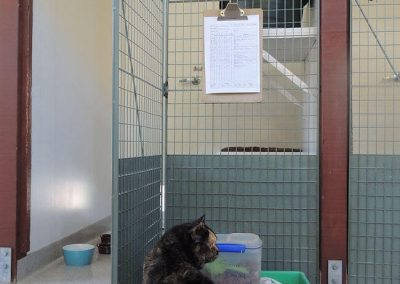 Cat outside a cattery unit